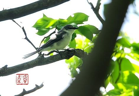 Sansyoukui8429