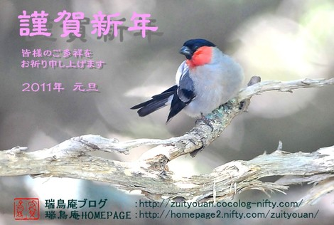 2010newyearcard