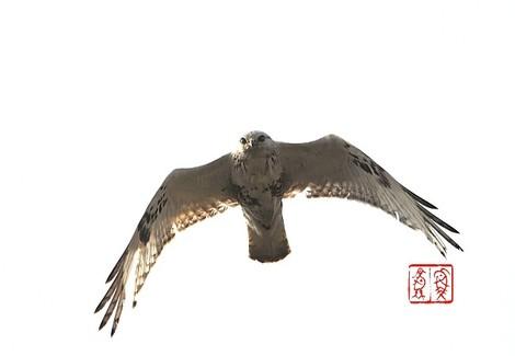 Keashinosuri3326_2