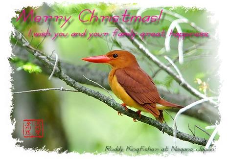 Christmas_card_2011
