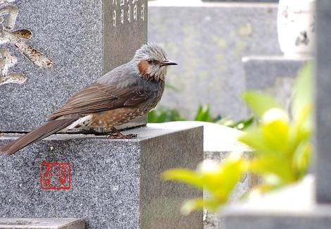 Hiyodorin0033