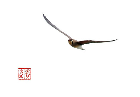 Tsubamechidori5649