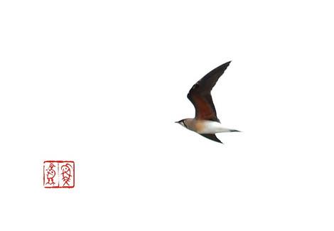 Tsubamechidori5656