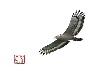Kanmuriwashi5634