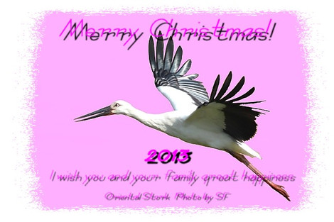 2013christmascard_2