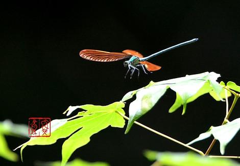 Ookawatonbo4599