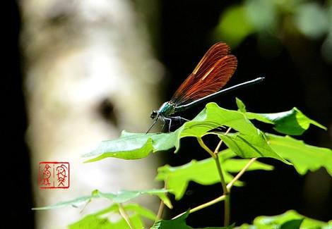 Ookawatonbo4601