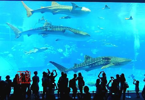 Aquarium8372n