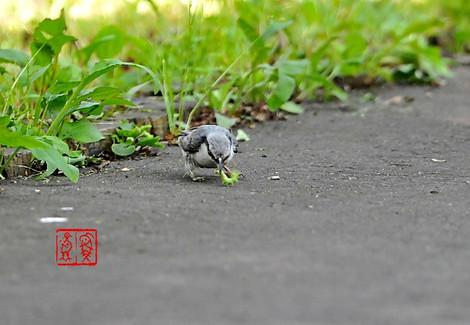 Shiroharagojyuukara1324