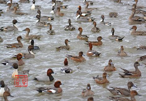 Duck700020141113