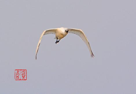 Kurotsuraherasagi186020150125