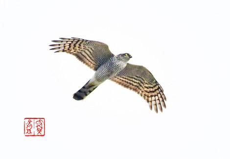 Haitaka201710107946