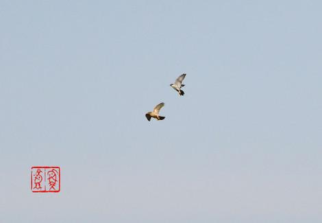 Hayabusa201802099300