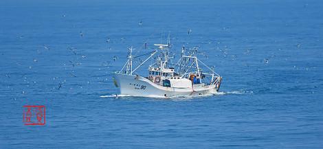 Fisherboatseabird201806036160