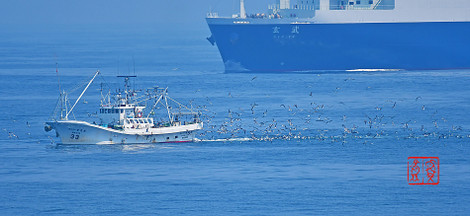 Fisherboatseabird201806036174