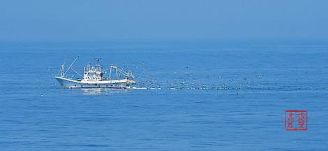 Fisherboatseabird201806036189