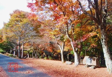 Yatakayama201811150390