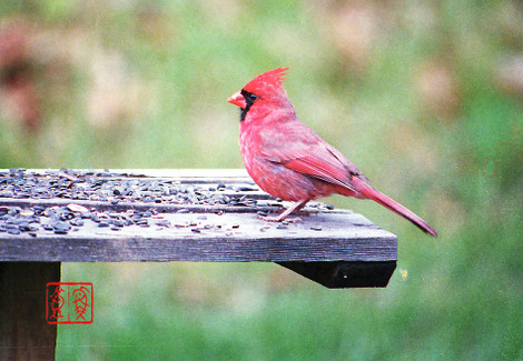Northerncardinal02
