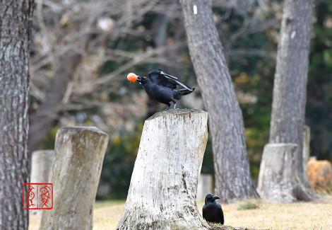 Hashibutogarasu201812130410
