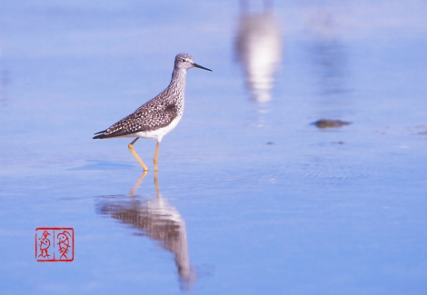 Lesseryellowlegs20