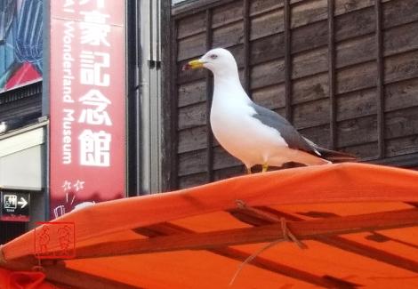 Umineko20190512_074124