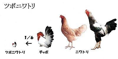Tsuboniwatori