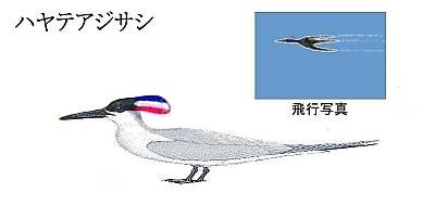 Hayateajisashi