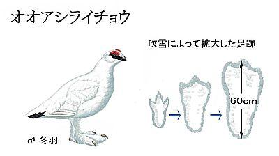 Ooashiraichou