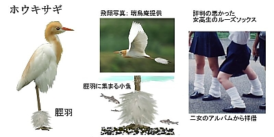 Houkisagi_3