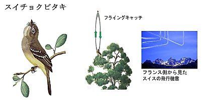 Suityokubitaki