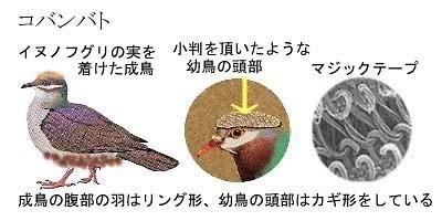 Kobanbato_2