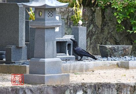 Hashibutogarasu202005307467