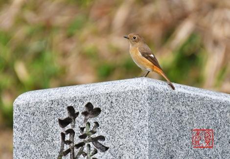 Jyoubitaki202010268843