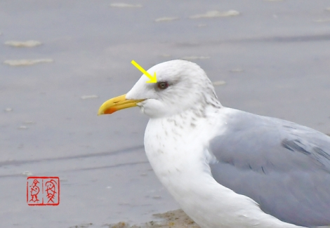 Segurokamome202001121321z